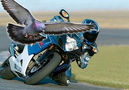 Моторист оцелява след сблъсък с гълъб и удар в дърво с 225 км/ч.