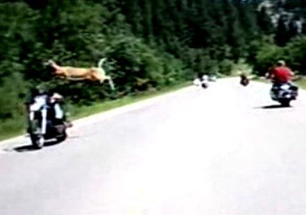 Елен прескача моторист